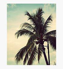 Palms  Photographic Print