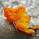 Tremella mesenterica - Orange Brain Fungus by MotherNature