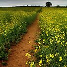 As We Walked In Fields Of Gold by Mat Robinson