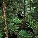 green lush by paul erwin