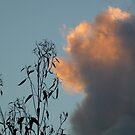 Sky Contrasts by JudyDarcy