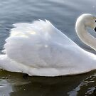 Ride A White Swan by martin bullimore