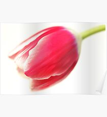 A Humble Tulip Poster