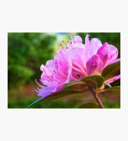 Olga Mezitt Rhododendron Photographic Print