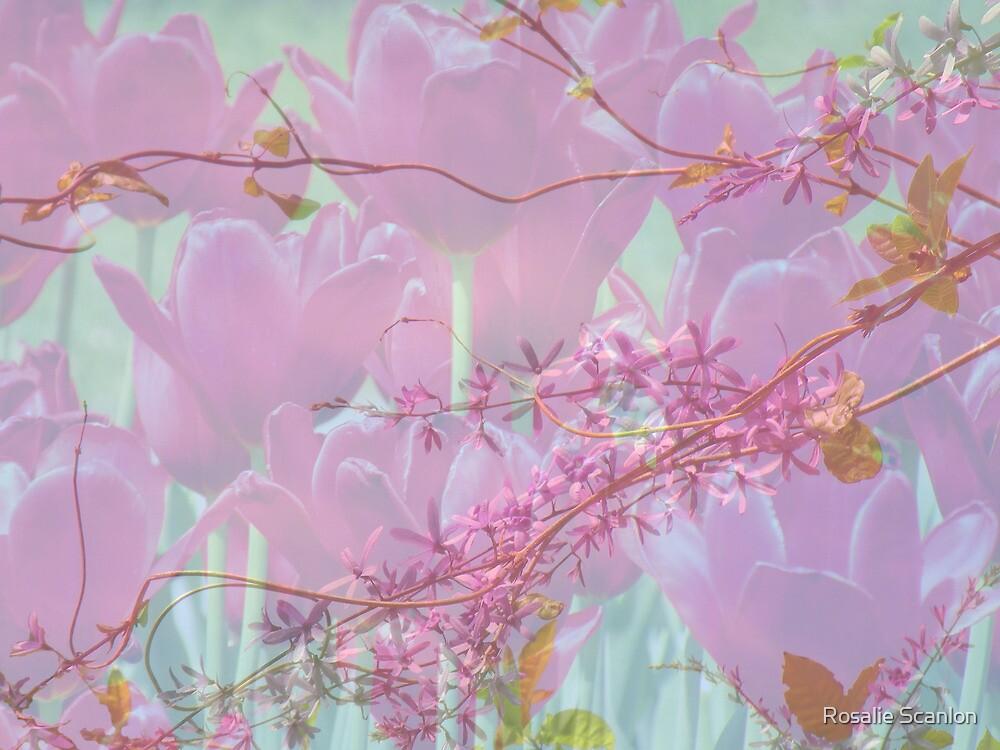 Spring by Rosalie Scanlon