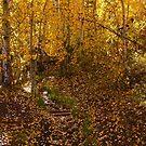 Raining Leaves by Barbara  Brown