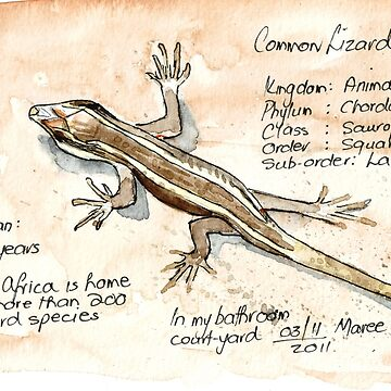 African Striped Skink - Not so easy! by MareeClarkson