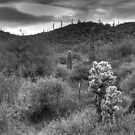 Cactus Hill by Tracy Riddell