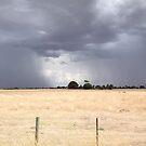 Stormy sky-yellow paddock by exuberantspirit