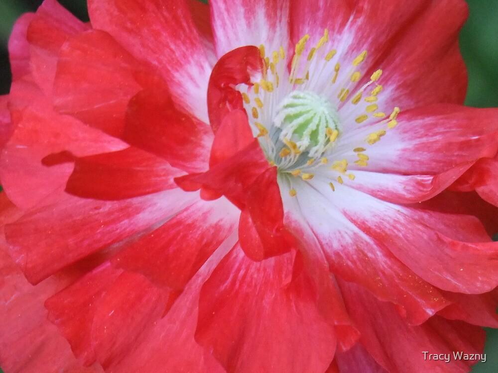Poppy Power by Tracy Wazny