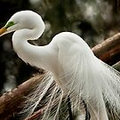 Great White Egret On The Nest by Joe Jennelle