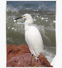 Red Rocks, White Heron, Blue Ocean - Rocas Rojas, Garza Blanca, Oceano Azul Poster