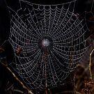 Cobweb by Samantha Higgs