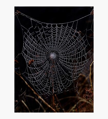 Cobweb Photographic Print