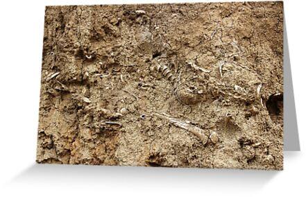 Human Remains by Omar Dakhane