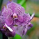 Orchid Eyes by Ann J. Sagel