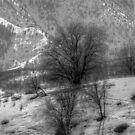 Winter in Utah by Raider6569