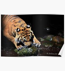 A big tigers paw Poster