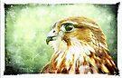 Merlin portrait by David Carton