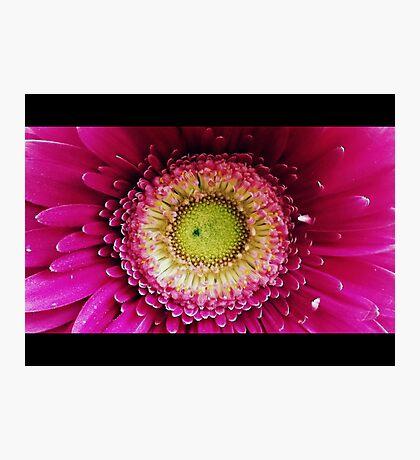 23 Monthaversary Flower Photographic Print