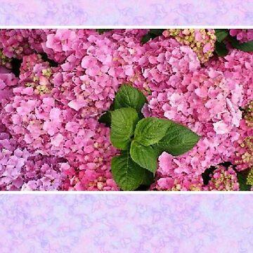 Pretty In Pink Hydrangea Card by dorcas13