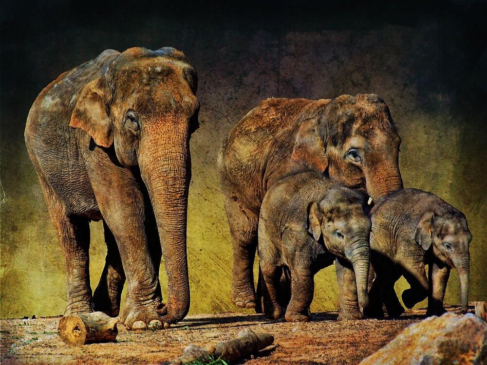 Family Unit by Dave Godden