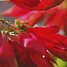 Season's Greetings by tropicalsamuelv