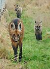 Maned wolf family by Anthony Brewer
