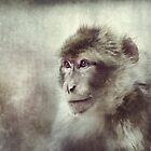 Snow Monkey by polly470