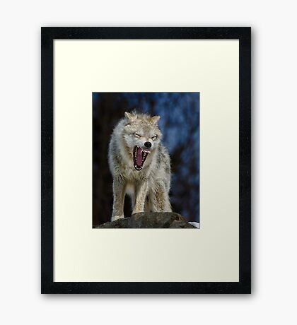 Angry like the wolf Framed Print
