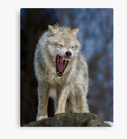 Angry like the wolf Metal Print