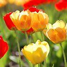 Spring has sprung! by DougOlsen