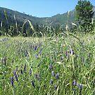 Meadow by faeeri