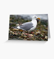 Gull On the Beach (KeyPort WA) Greeting Card