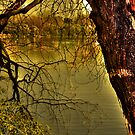 Withered old tree by Kgphotographics