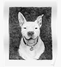 Stanley the Pit bull Poster