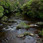 Kangaroo River. 7-3-12. by Warren  Patten