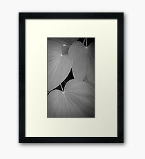Dull day, after a shower Framed Print