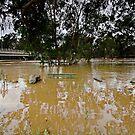 Murrumbidgee Floods - Front Row Seat Day 3 by bazcelt