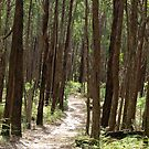 Stringybark Track, Morwell National Park by Bev Pascoe