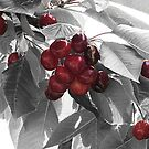 Cherries by ANDREA SIDENSTRICKER