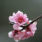 Bloom by ANDREA SIDENSTRICKER