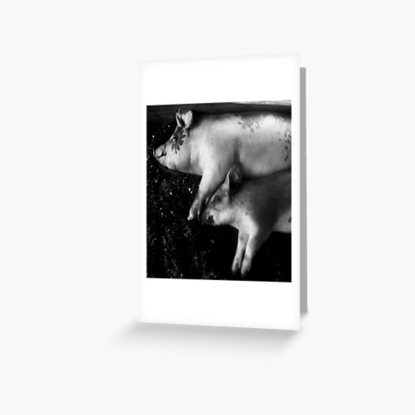 pigs at rest Greeting Card