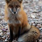 fox force II by punchdrunklove