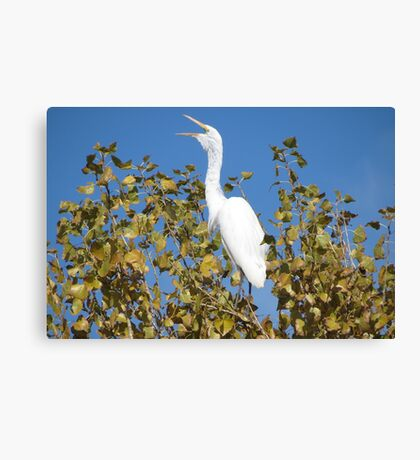 Great White Egret ~ ♪ I'm Sexy and I know it ♫ Canvas Print