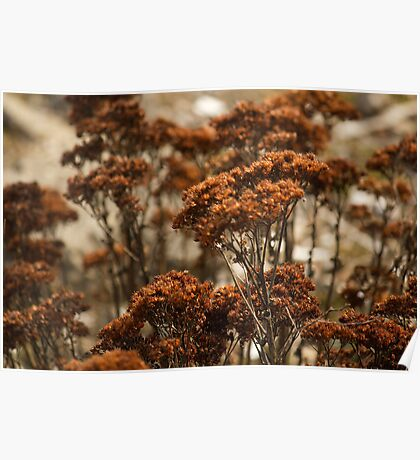 Forest of Dried Flowers Poster