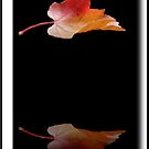 The Fallen by Kym Howard
