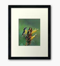 Bananaquit Framed Print