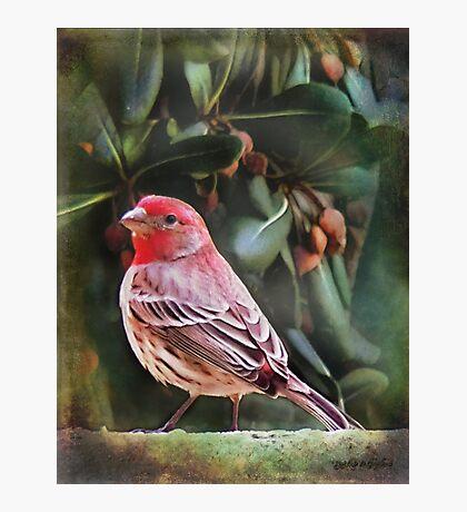 Little Bird IV (Art & Poetry) Photographic Print