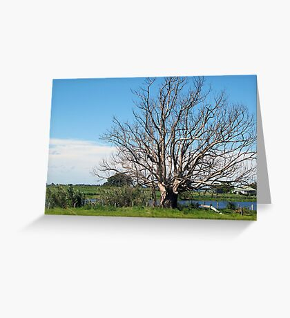 lithgow tree Greeting Card